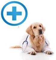 Оборудование, уход, гигиена, ветеринария, кормовые добавки и разные полезности
